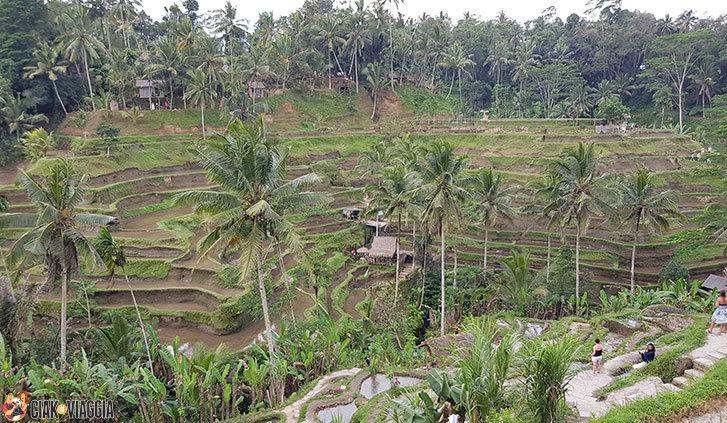 Risaie terrazzate - Zona Ubud - Bali