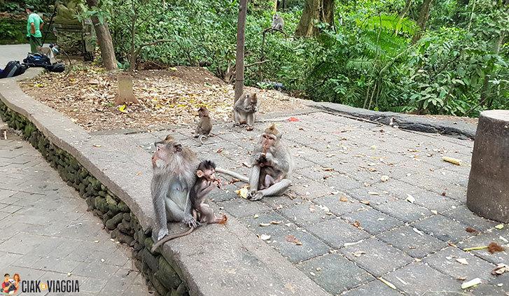 Scimmie alla Monkey Forest di Bali