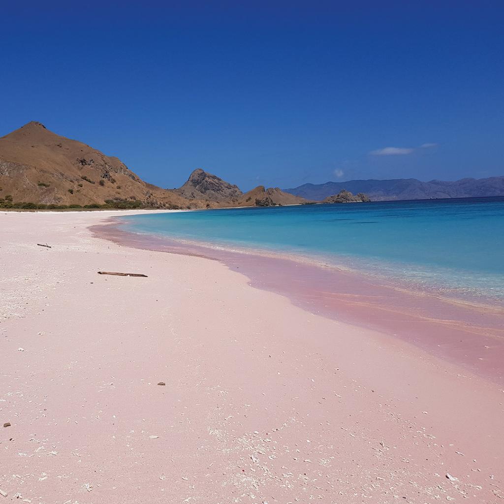 Komodo Indonesia Pink Beach