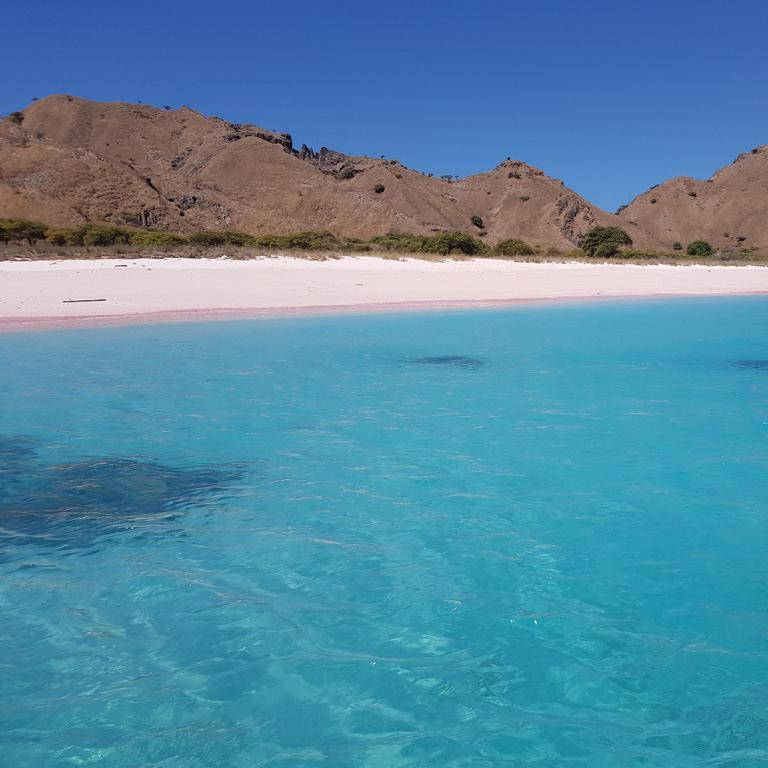Komodo Indonesia Pink Beach