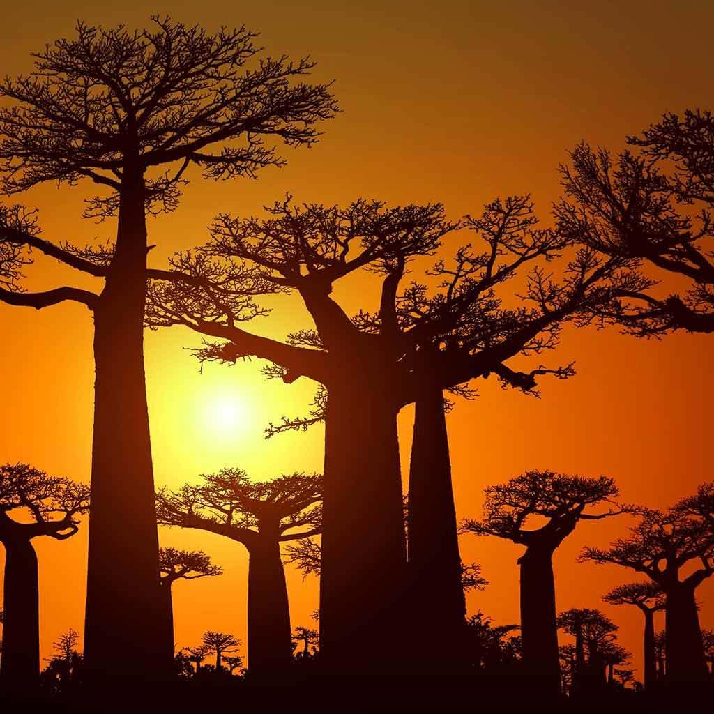 Route Baobab Madagascar