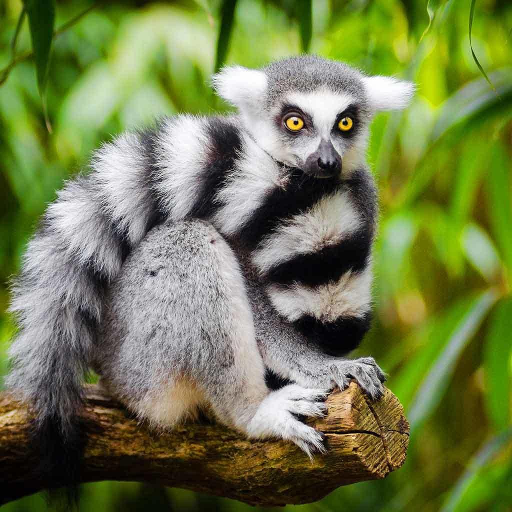 Altipiani Centrali - Madagascar