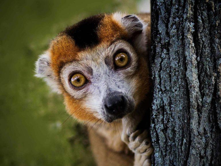 lemure viaggio tour madagascar