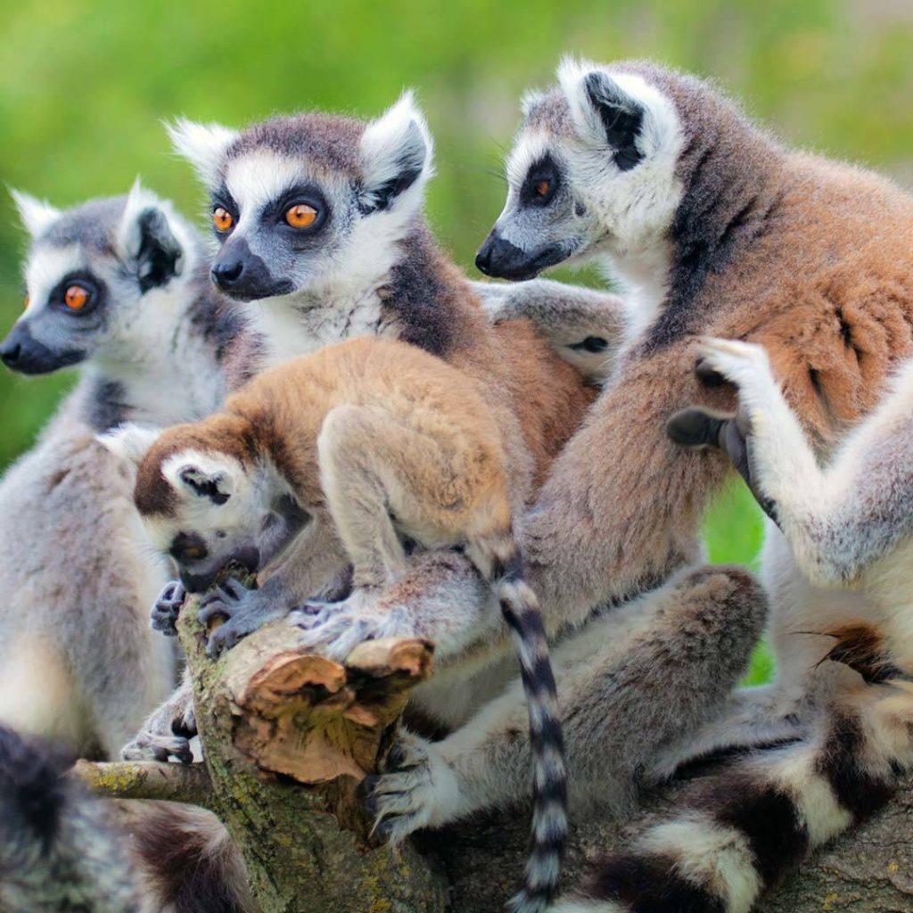 Tour Madagascar del centro e ell'Est