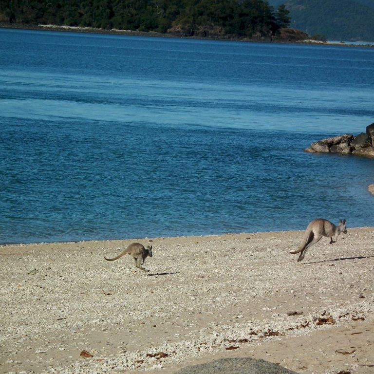 Tour Australia Wild