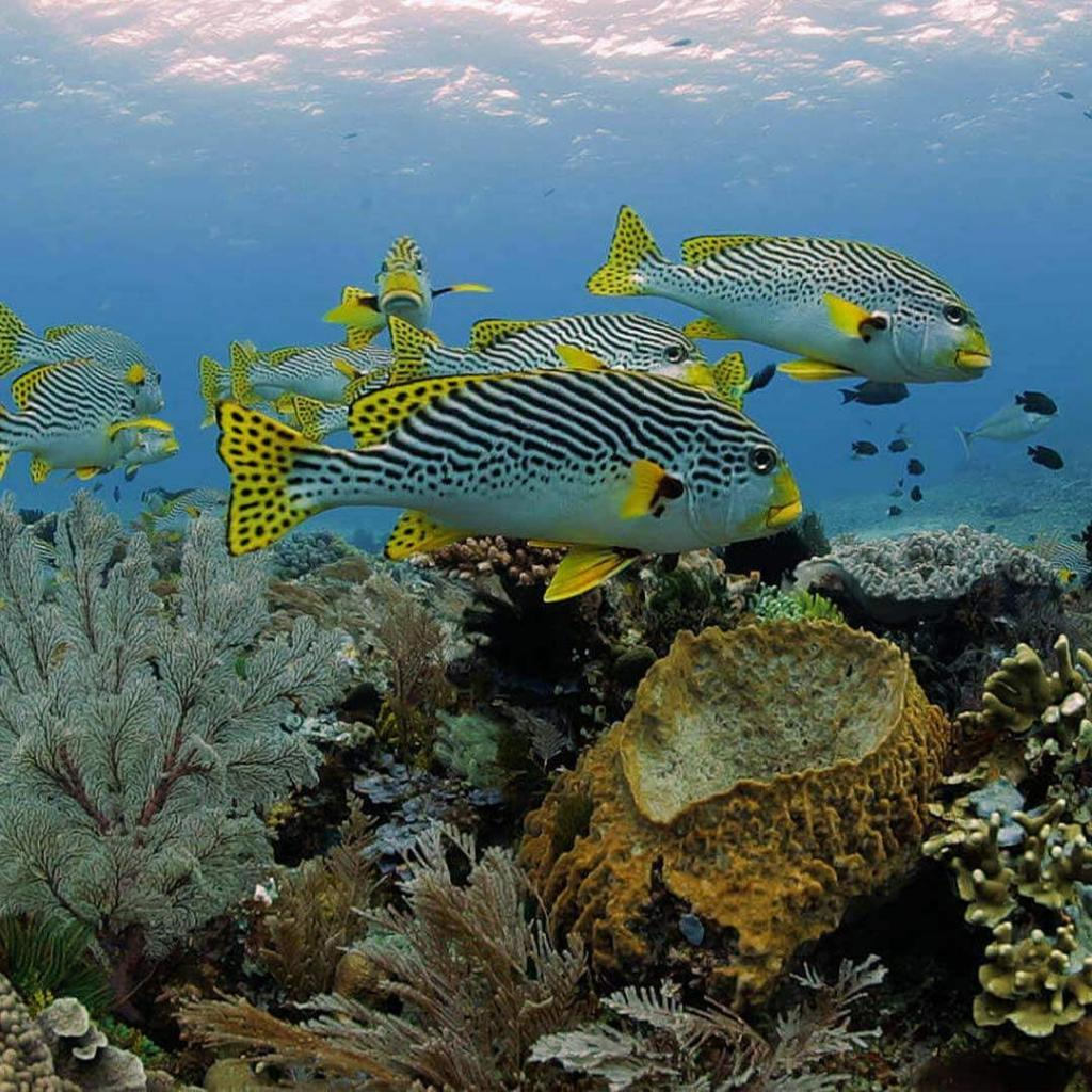 Indonesia-Komodo-resort-diving
