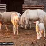 Agriturismo Campallegro Toscana