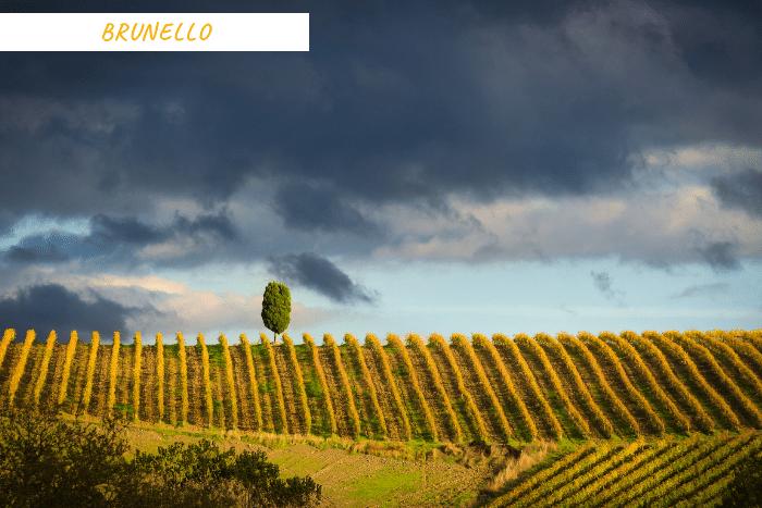 vacanze toscana vino (3)