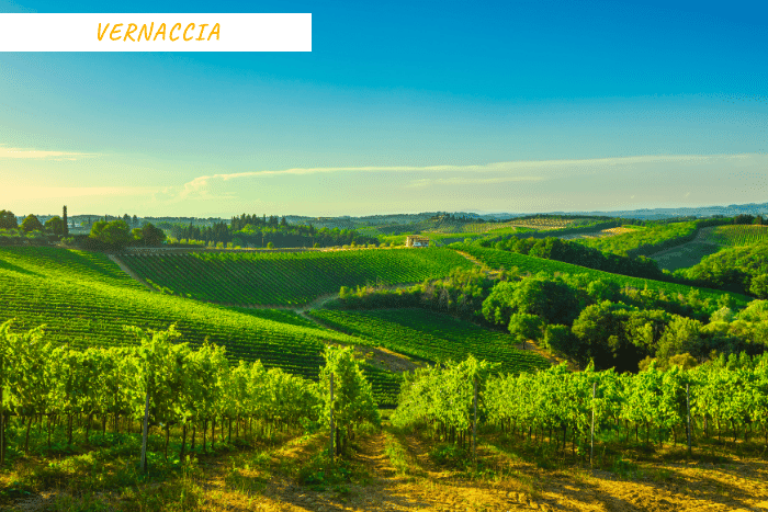 vacanze toscana vino (5)
