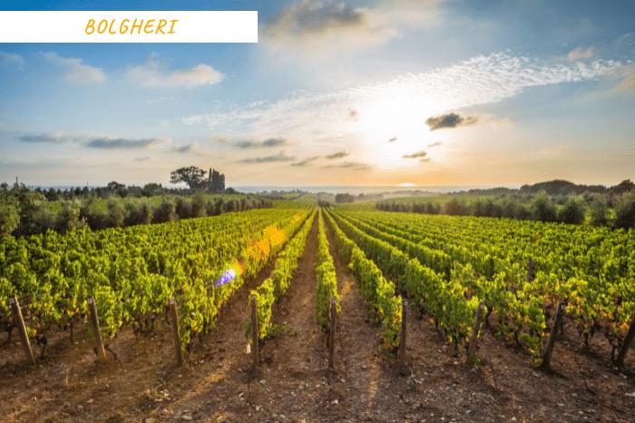 vacanze toscana vino (6)